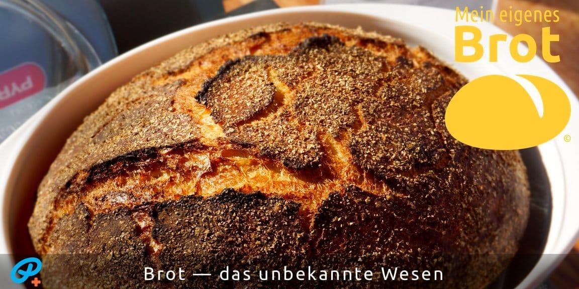 Brot — das unbekannte Wesen